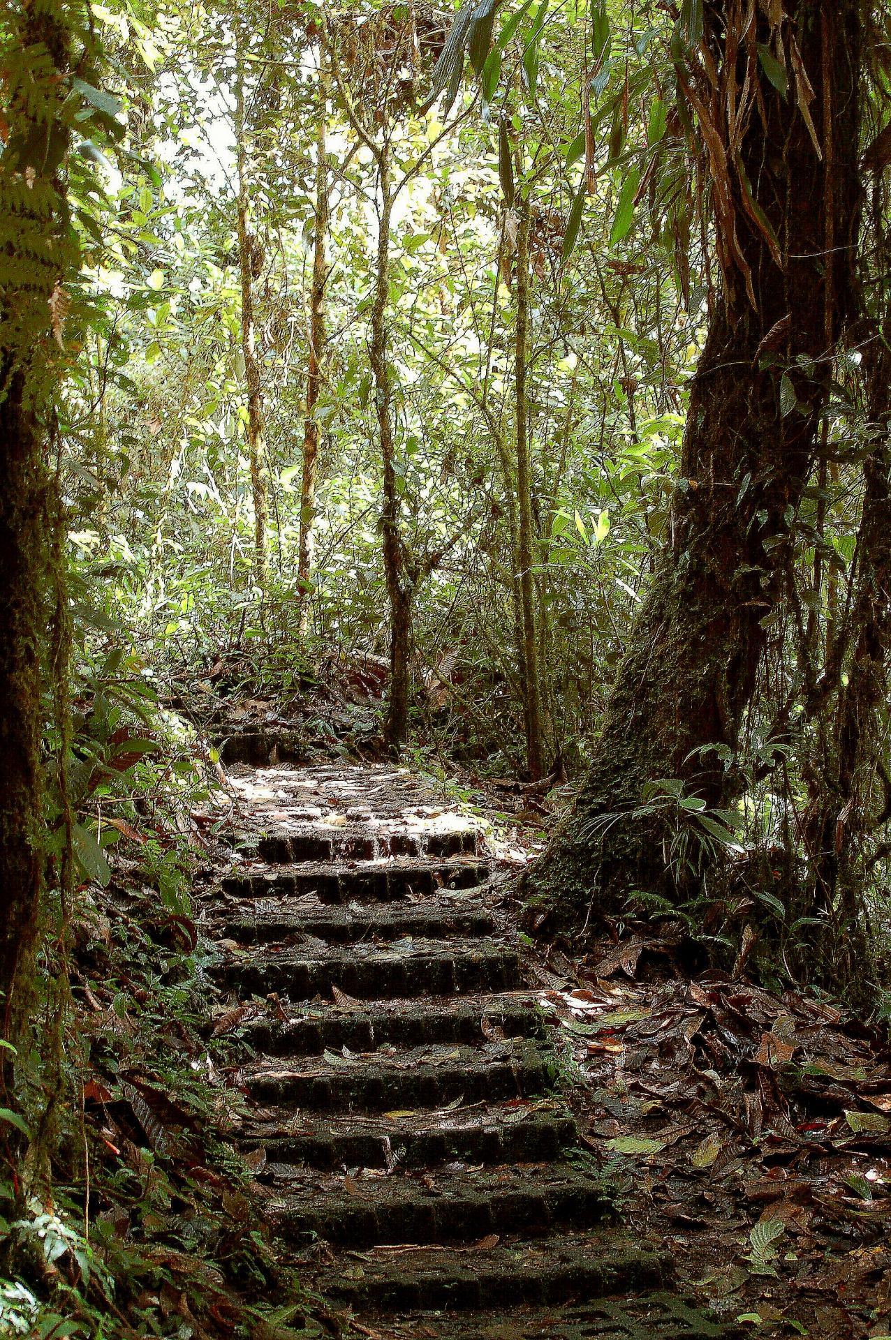 Entree jungle avec escalier