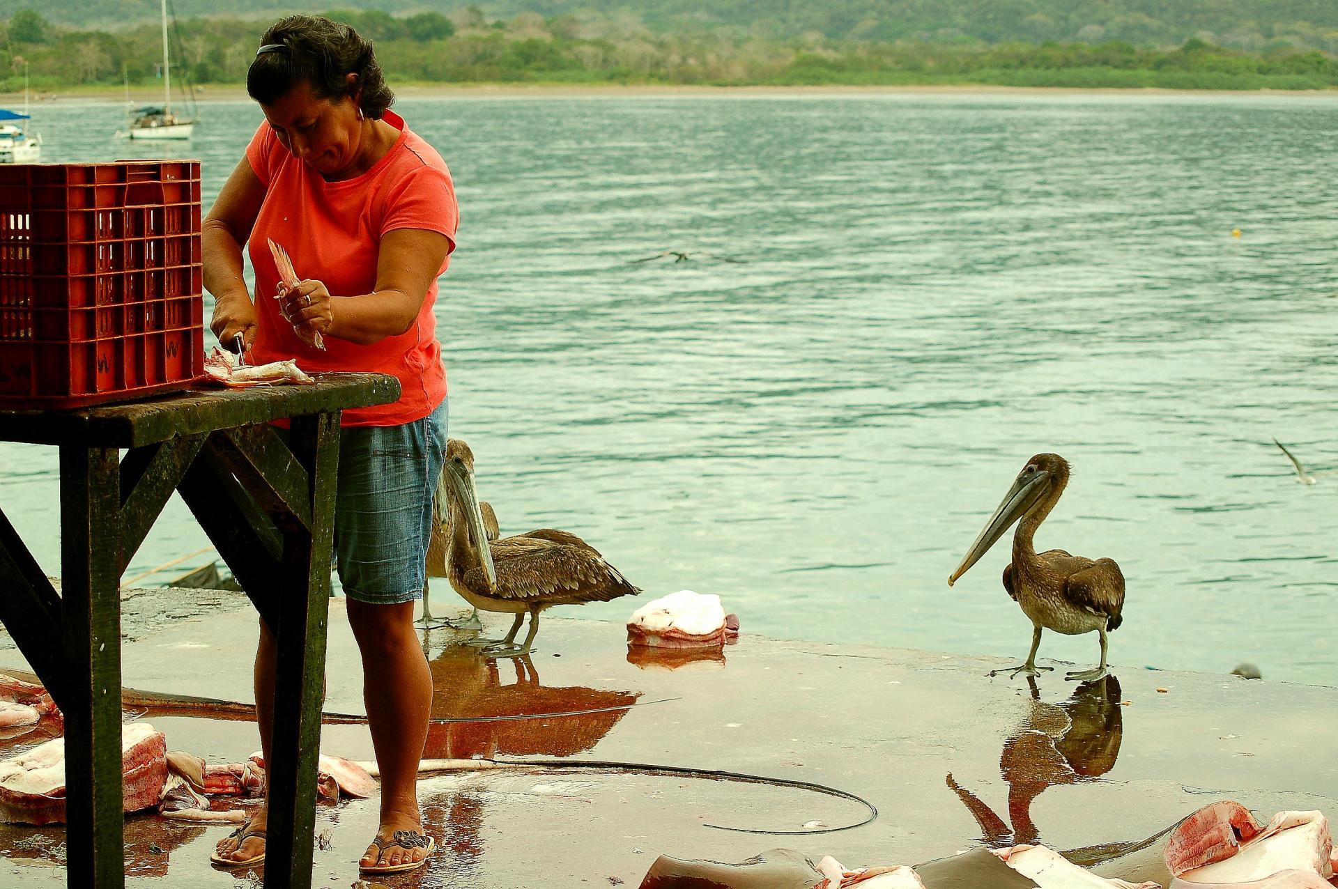 Femme de pecheurs et pelicans